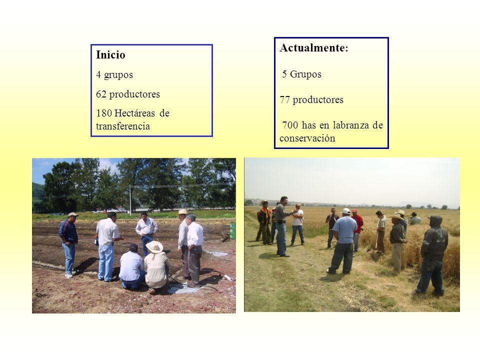 Actualmente : 5 Grupos 77 productores 700 has en labranza de conservación Inicio 4 grupos 62 productores 180 Hectáreas de transferencia
