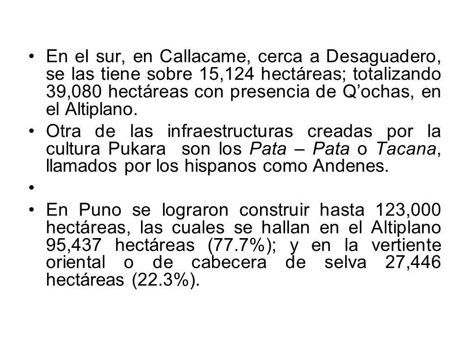 En el sur, en Callacame, cerca a Desaguadero, se las tiene sobre 15,124 hectáreas; totalizando 39,080 hectáreas con presencia de Qochas, en el Altipla