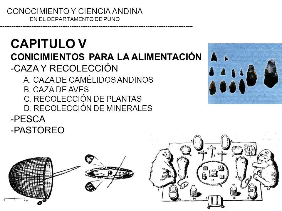 CAPITULO V CONICIMIENTOS PARA LA ALIMENTACIÓN -CAZA Y RECOLECCIÓN A. CAZA DE CAMÉLIDOS ANDINOS B. CAZA DE AVES C. RECOLECCIÓN DE PLANTAS D. RECOLECCIÓ