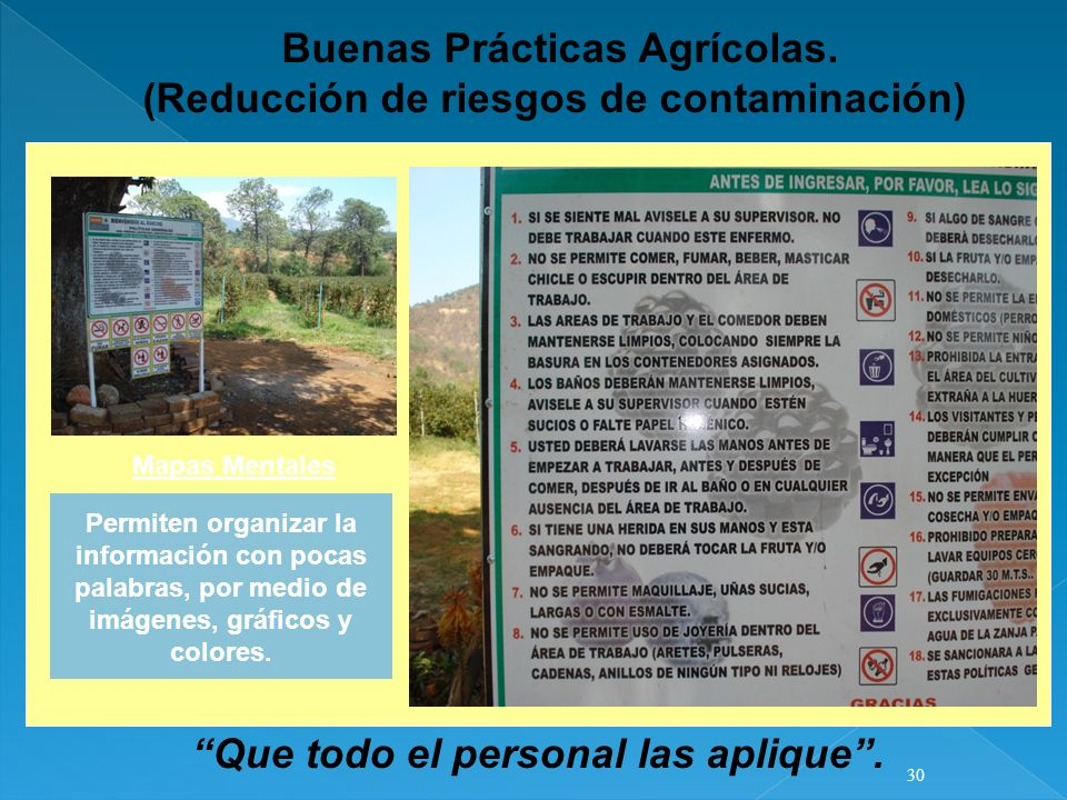Buenas Prácticas Agrícolas. (Reducción de riesgos de contaminación) Mapas Mentales Permiten organizar la información con pocas palabras, por medio de
