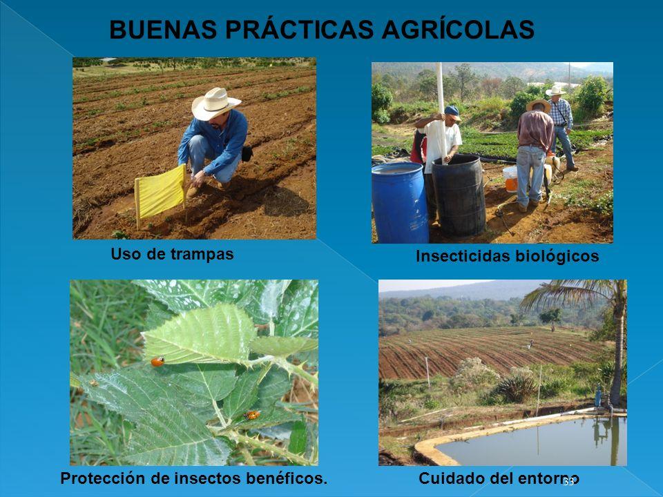 BUENAS PRÁCTICAS AGRÍCOLAS Uso de trampas Insecticidas biológicos Protección de insectos benéficos.Cuidado del entorno 33