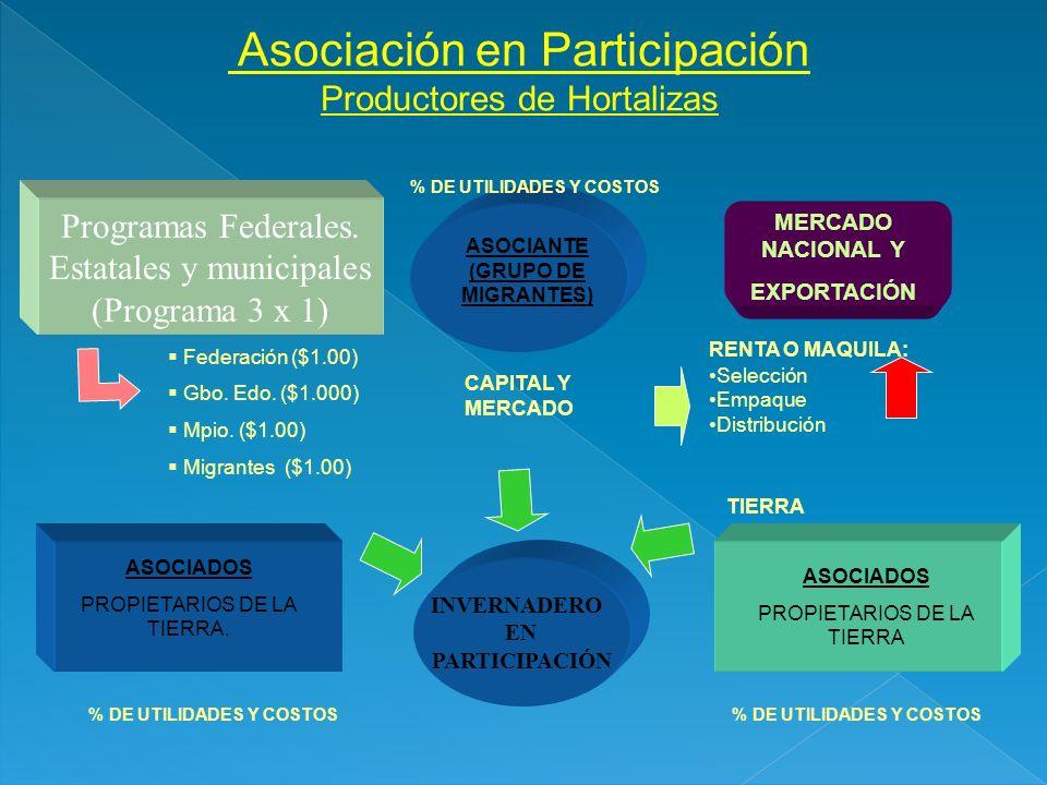 Programas Federales. Estatales y municipales (Programa 3 x 1) Asociación en Participación Productores de Hortalizas ASOCIANTE (GRUPO DE MIGRANTES) ASO