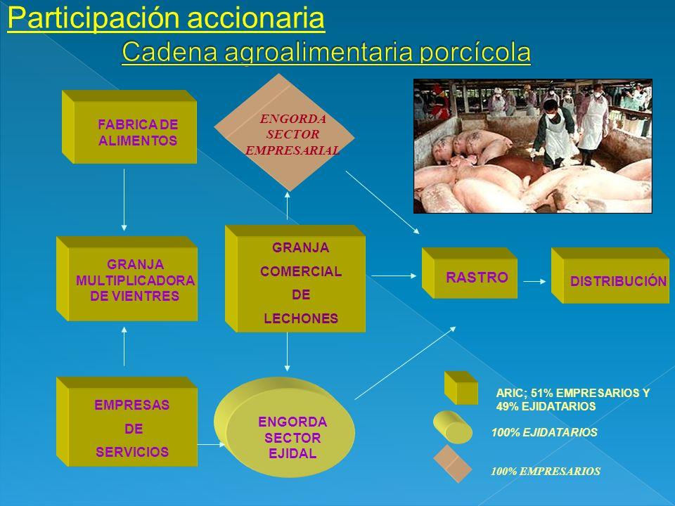 FABRICA DE ALIMENTOS GRANJA MULTIPLICADORA DE VIENTRES EMPRESAS DE SERVICIOS GRANJA COMERCIAL DE LECHONES RASTRO DISTRIBUCIÓN ARIC; 51% EMPRESARIOS Y