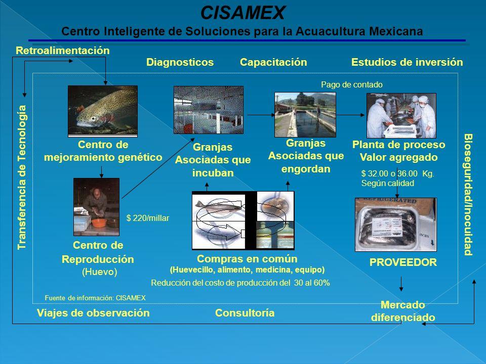 CISAMEX Centro Inteligente de Soluciones para la Acuacultura Mexicana Centro de Reproducción (Huevo) Granjas Asociadas que incuban Centro de mejoramie