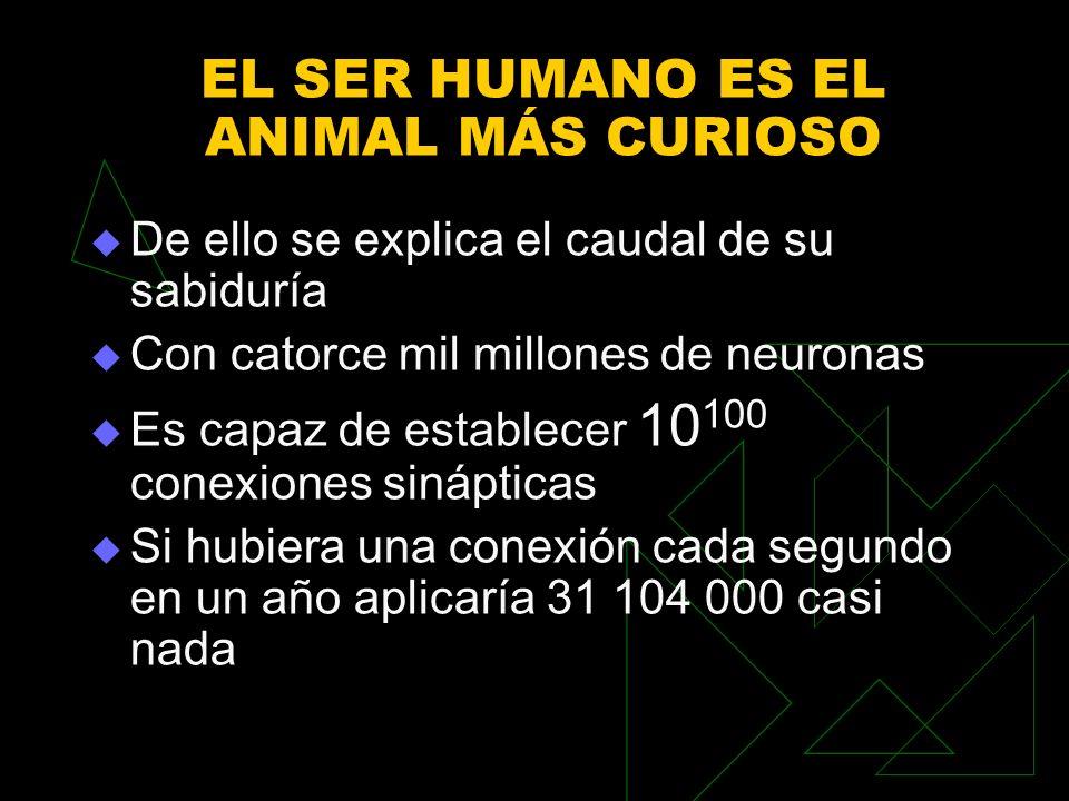 EL SER HUMANO ES EL ANIMAL MÁS CURIOSO De ello se explica el caudal de su sabiduría Con catorce mil millones de neuronas Es capaz de establecer 10 100 conexiones sinápticas Si hubiera una conexión cada segundo en un año aplicaría 31 104 000 casi nada