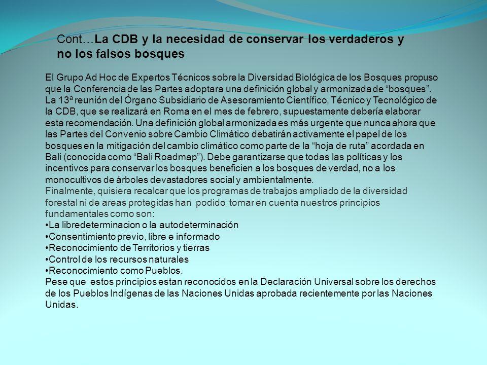 El Grupo Ad Hoc de Expertos Técnicos sobre la Diversidad Biológica de los Bosques propuso que la Conferencia de las Partes adoptara una definición glo