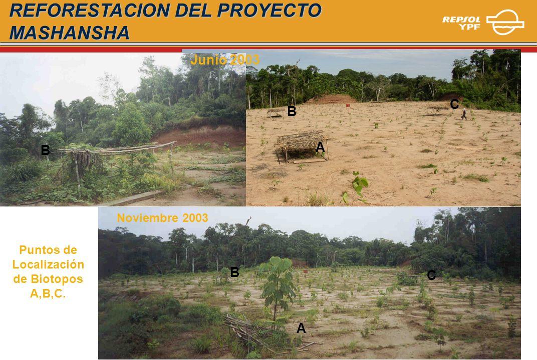 Puntos de Localización de Biotopos A,B,C. Noviembre 2003 A B C A B C B Junio 2003 REFORESTACION DEL PROYECTO MASHANSHA