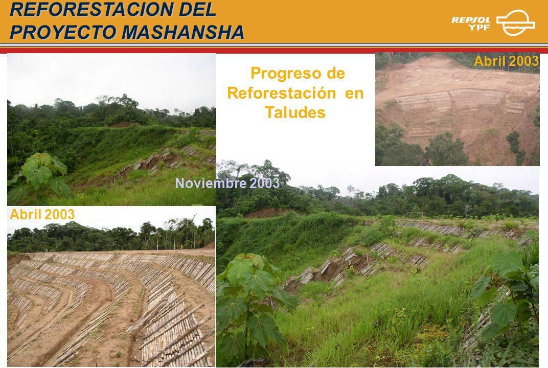 Noviembre 2003 Abril 2003 Progreso de Reforestación en Taludes REFORESTACION DEL PROYECTO MASHANSHA