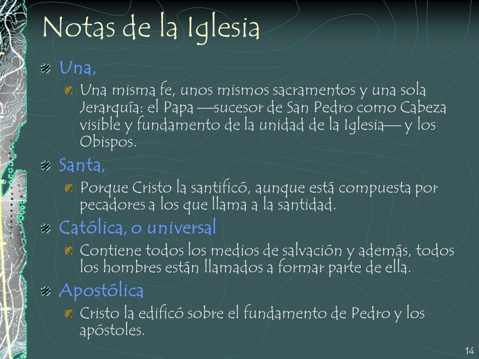 14 Notas de la Iglesia Una, Una misma fe, unos mismos sacramentos y una sola Jerarquía: el Papa sucesor de San Pedro como Cabeza visible y fundamento