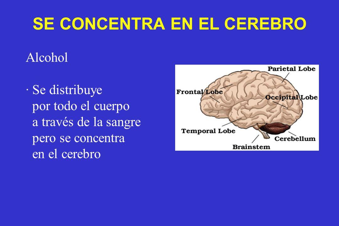 Alcohol · Se distribuye por todo el cuerpo a través de la sangre pero se concentra en el cerebro SE CONCENTRA EN EL CEREBRO