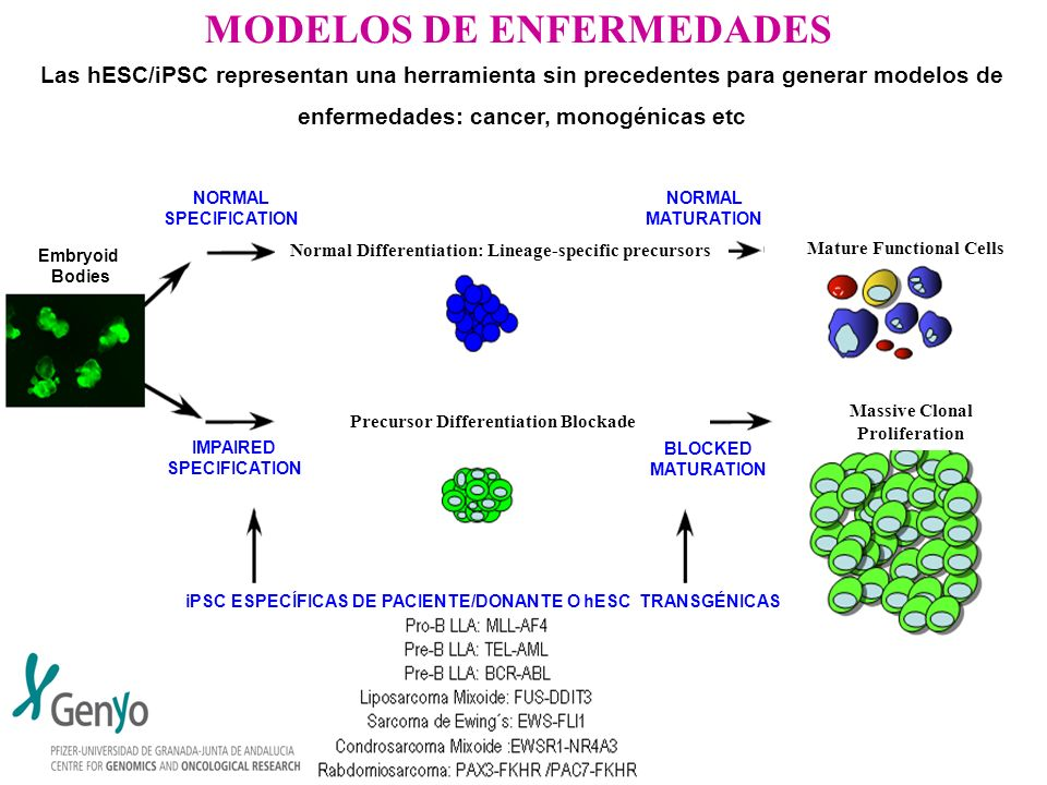 MODELOS DE ENFERMEDADES Las hESC/iPSC representan una herramienta sin precedentes para generar modelos de enfermedades: cancer, monogénicas etc iPSC E