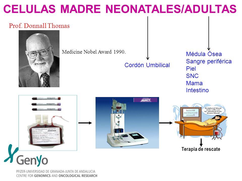 CELULAS MADRE NEONATALES/ADULTAS Terapia de rescate Medicine Nobel Award 1990. Prof. Donnall Thomas Cordón Umbilical Médula Ósea Sangre periférica Pie