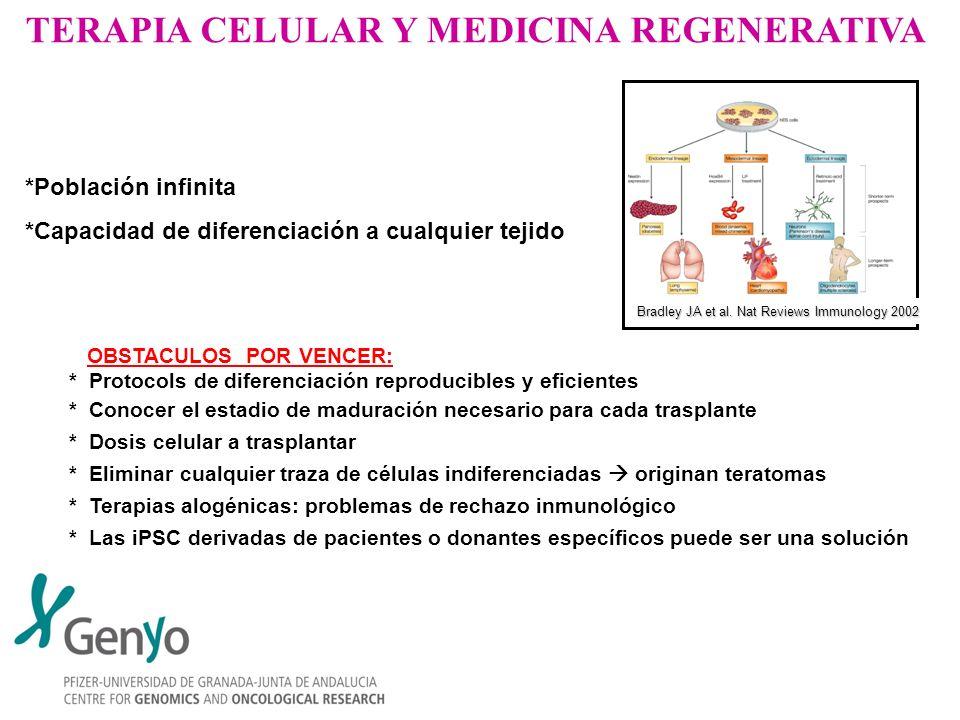 TERAPIA CELULAR Y MEDICINA REGENERATIVA OBSTACULOS POR VENCER: * Protocols de diferenciación reproducibles y eficientes * Conocer el estadio de madura