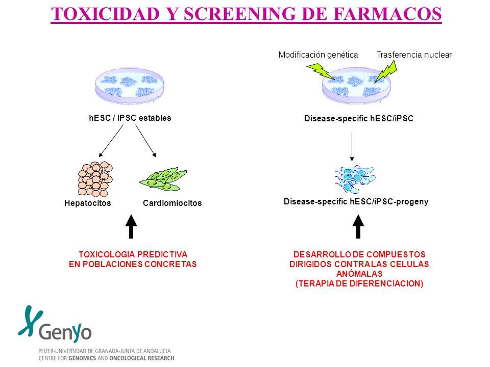TOXICIDAD Y SCREENING DE FARMACOS hESC / iPSC estables Hepatocitos Cardiomiocitos TOXICOLOGIA PREDICTIVA EN POBLACIONES CONCRETAS Disease-specific hES
