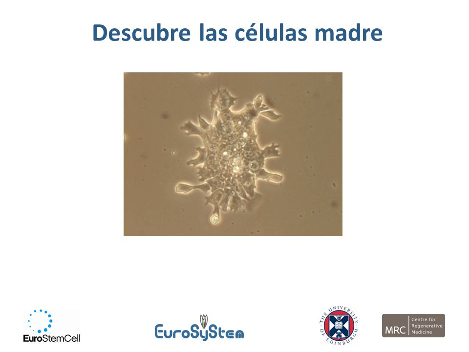Al finalizar la sesión, deberás… Saber lo que es una célula madre Conocer los diferentes tipos de célula madre y dónde se encuentran Saber por qué las células madre son importantes