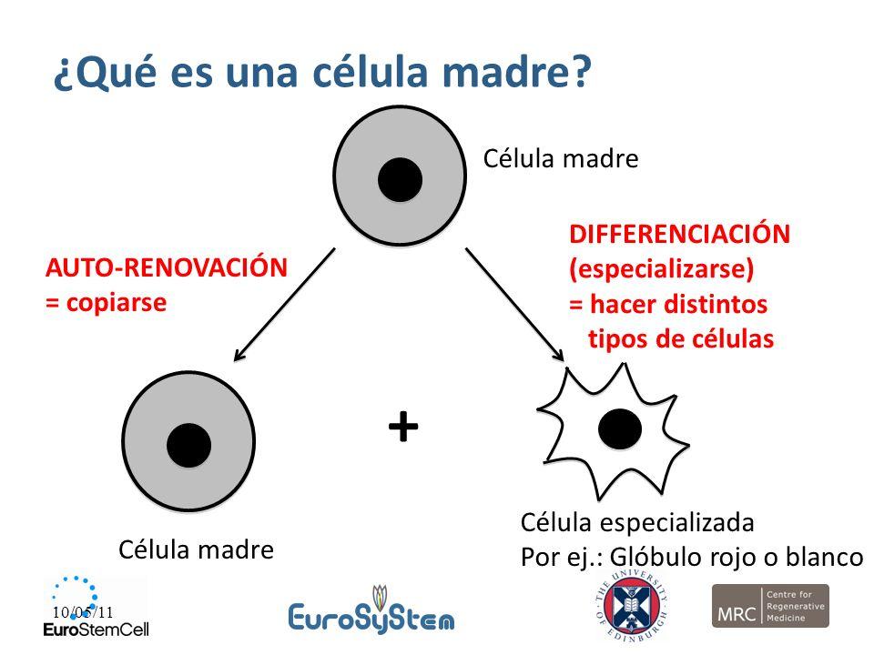 10/05/11 Célula madre AUTO-RENOVACIÓN = copiarse Célula especializada Por ej.: Glóbulo rojo o blanco DIFFERENCIACIÓN (especializarse) = hacer distinto