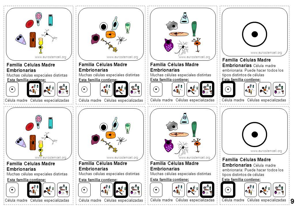 Familia Células Madre Embrionarias Muchas células especiales distintas Familia Células Madre Embrionarias Célula madre embrionaria: Puede hacer todos
