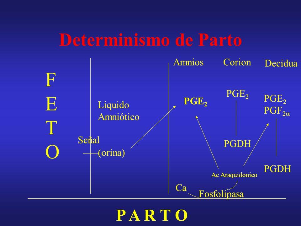 Determinismo del parto Fase 0Fase 1Fase 2Fase3 Inicio del parto Inicio T de P.