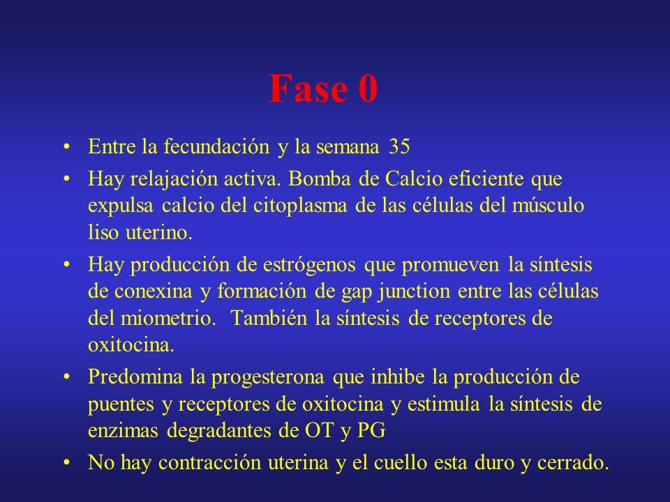 Fase 1 Entre las semanas 36 y 40 Disminuye el efecto de la progesterona.