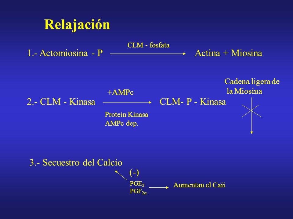 Cuello Uterino Composición –Músculo liso ( 25% - 6%) –Colágeno –Tejido conectivo La sustancia fundamental Glucosaminoglicanos Dermatan sulfato Ac.