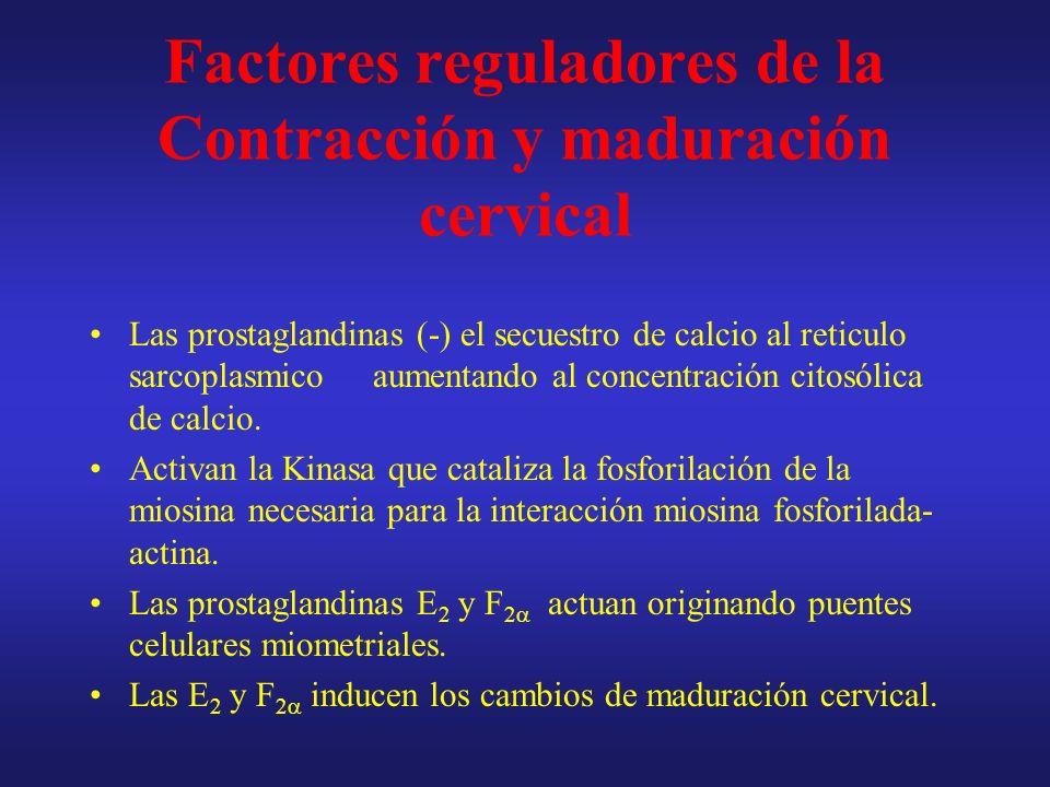 Períodos del parto I.Borramiento y dilatación II.