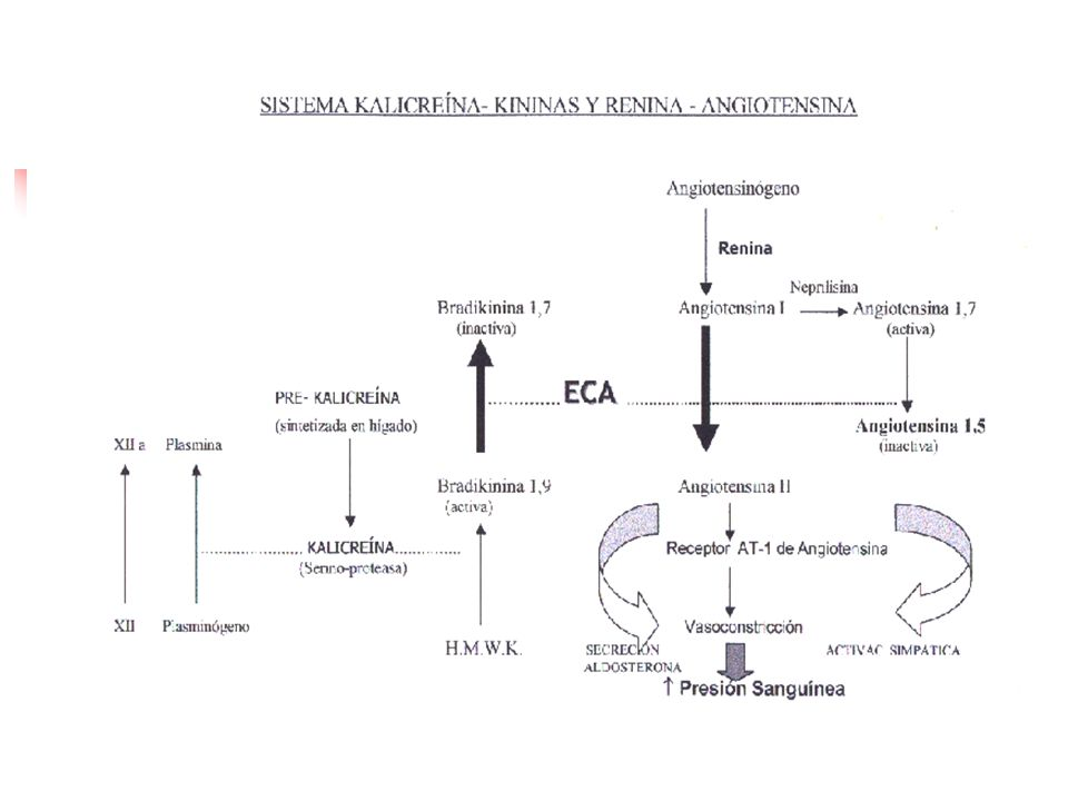 Enalapril = tabletas 5, 10, 20 mg Enalaprilato Absorción 60 %, no disminuido por la comida Peak plasmático 3- 4hrs Vida media 11 hrs Clearance Renal