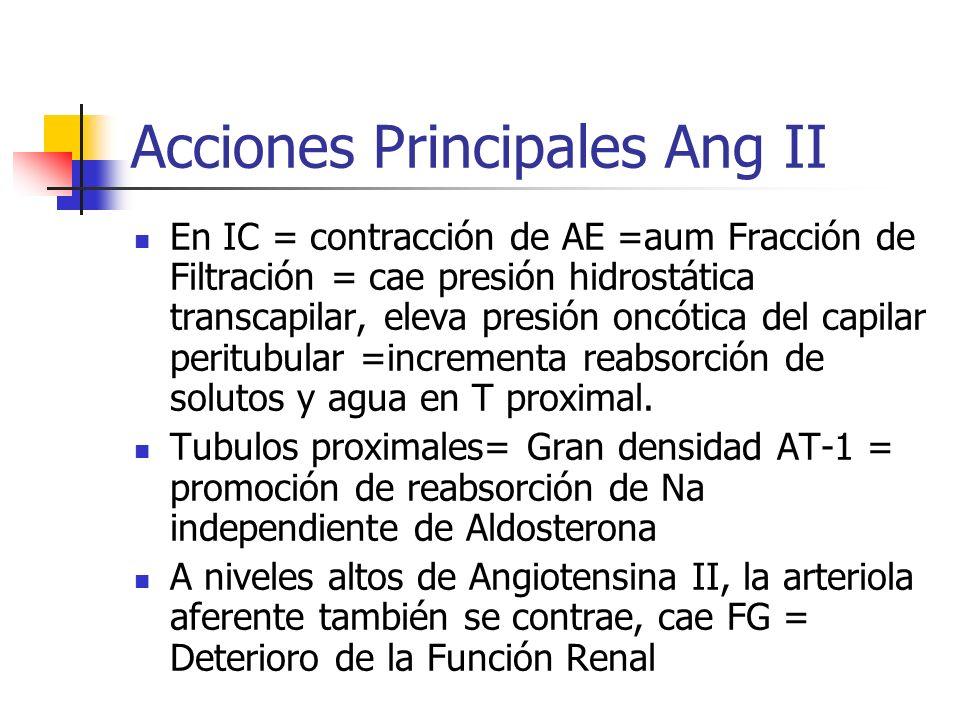 Mecanismos Antihipertensivos IECA Inhibición de Formación de Ang.