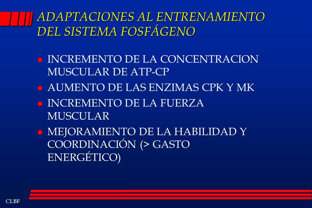 CLBF ADAPTACIONES AL ENTRENAMIENTO DEL SISTEMA FOSFÁGENO l INCREMENTO DE LA CONCENTRACION MUSCULAR DE ATP-CP l AUMENTO DE LAS ENZIMAS CPK Y MK l INCRE