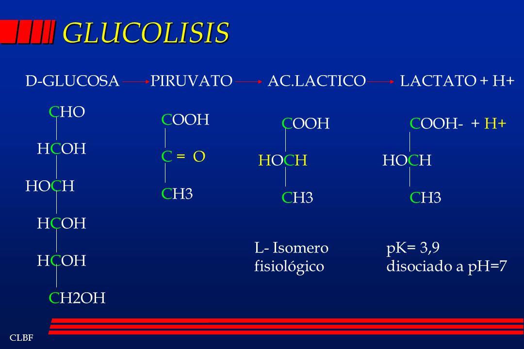 CLBF GLUCOLISIS D-GLUCOSA PIRUVATO AC.LACTICO LACTATO + H+ CHO HCOH HOCH HCOH CH2OH COOH C = O CH3 COOH HOCH CH3 COOH- + H+ HOCH CH3 L- Isomero fisiol