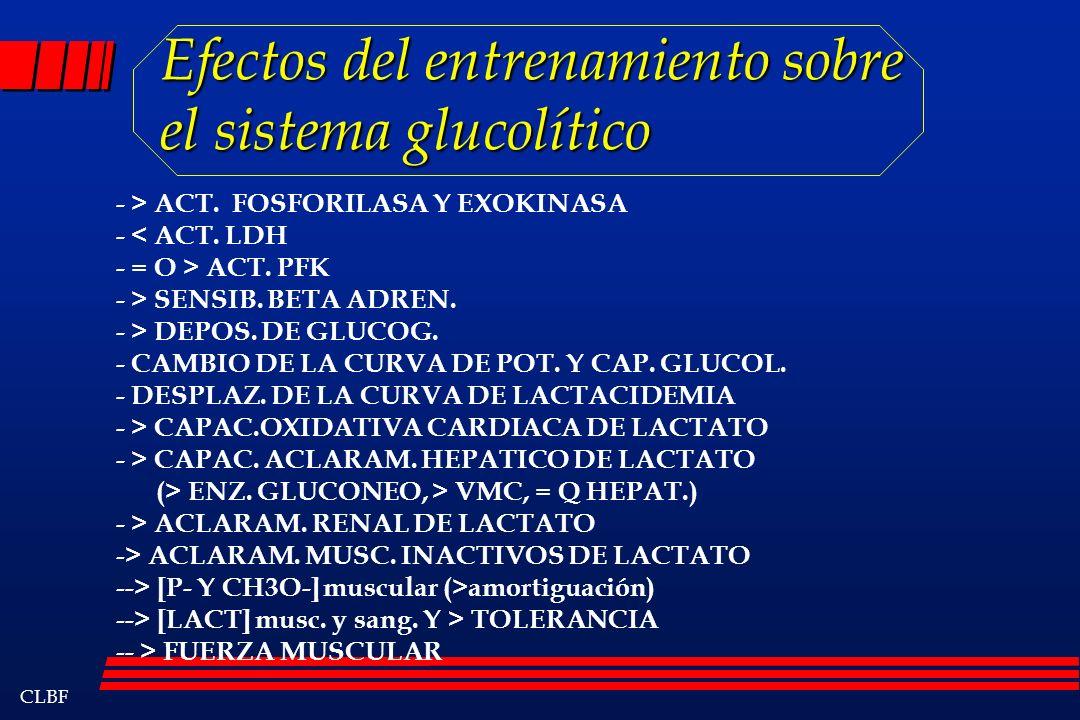 CLBF Efectos del entrenamiento sobre el sistema glucolítico - > ACT. FOSFORILASA Y EXOKINASA - < ACT. LDH - = O > ACT. PFK - > SENSIB. BETA ADREN. - >