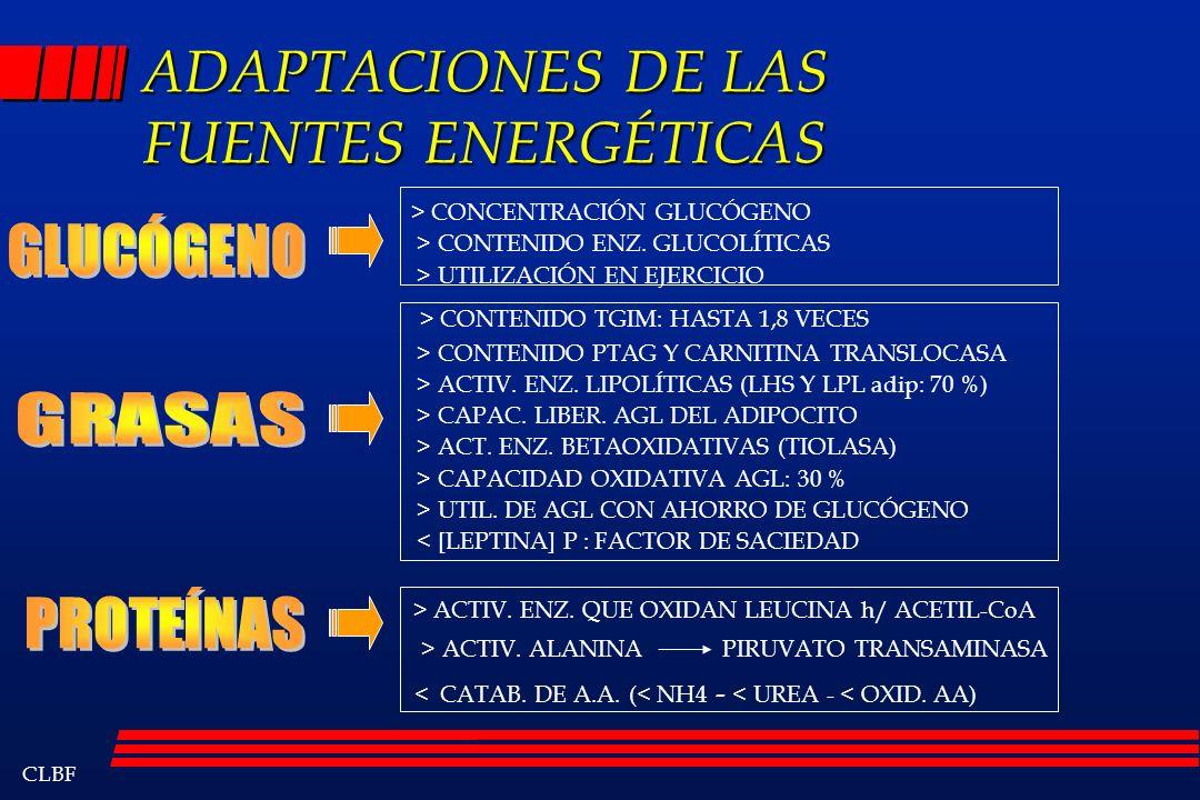 CLBF ADAPTACIONES DE LAS FUENTES ENERGÉTICAS > CONCENTRACIÓN GLUCÓGENO > CONTENIDO ENZ. GLUCOLÍTICAS > UTILIZACIÓN EN EJERCICIO > CONTENIDO TGIM: HAST