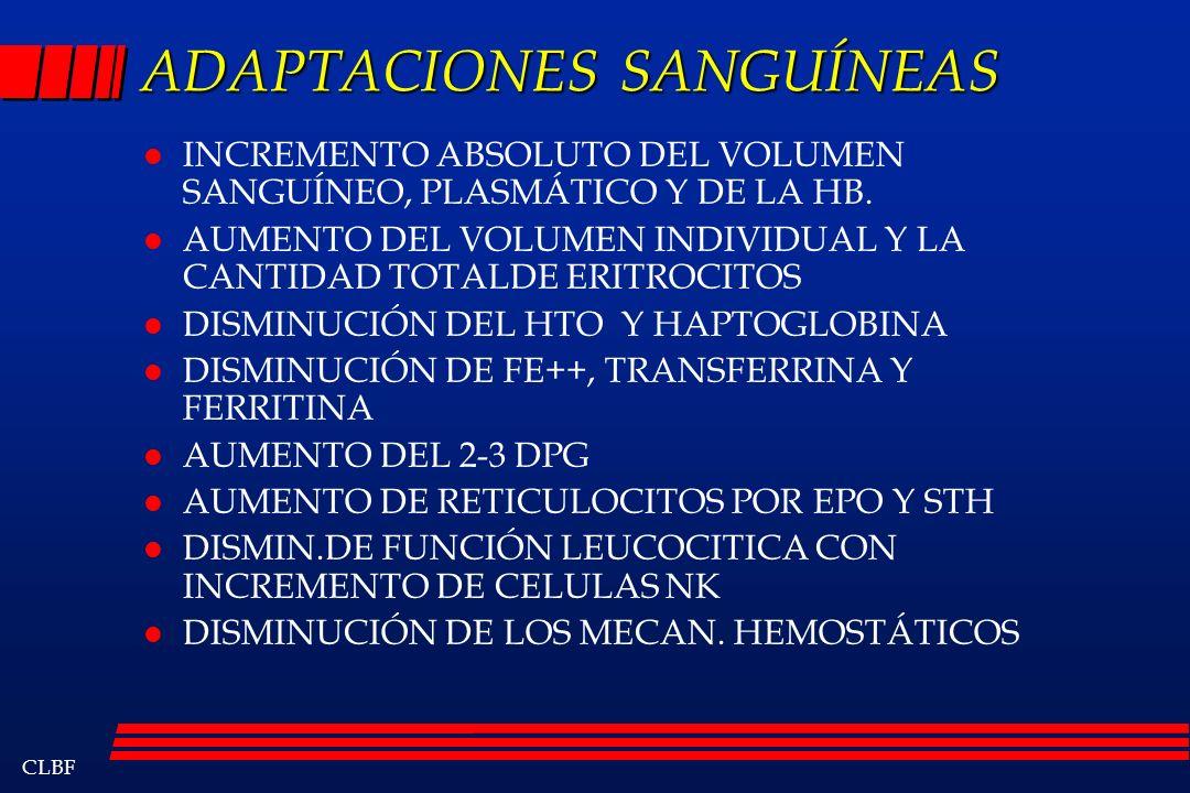 CLBF ADAPTACIONES SANGUÍNEAS l INCREMENTO ABSOLUTO DEL VOLUMEN SANGUÍNEO, PLASMÁTICO Y DE LA HB. l AUMENTO DEL VOLUMEN INDIVIDUAL Y LA CANTIDAD TOTALD