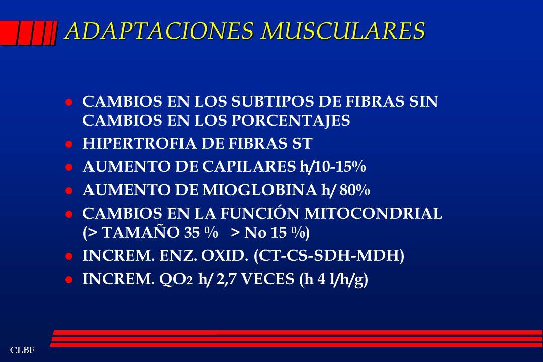 CLBF ADAPTACIONES MUSCULARES l CAMBIOS EN LOS SUBTIPOS DE FIBRAS SIN CAMBIOS EN LOS PORCENTAJES l HIPERTROFIA DE FIBRAS ST l AUMENTO DE CAPILARES h/10