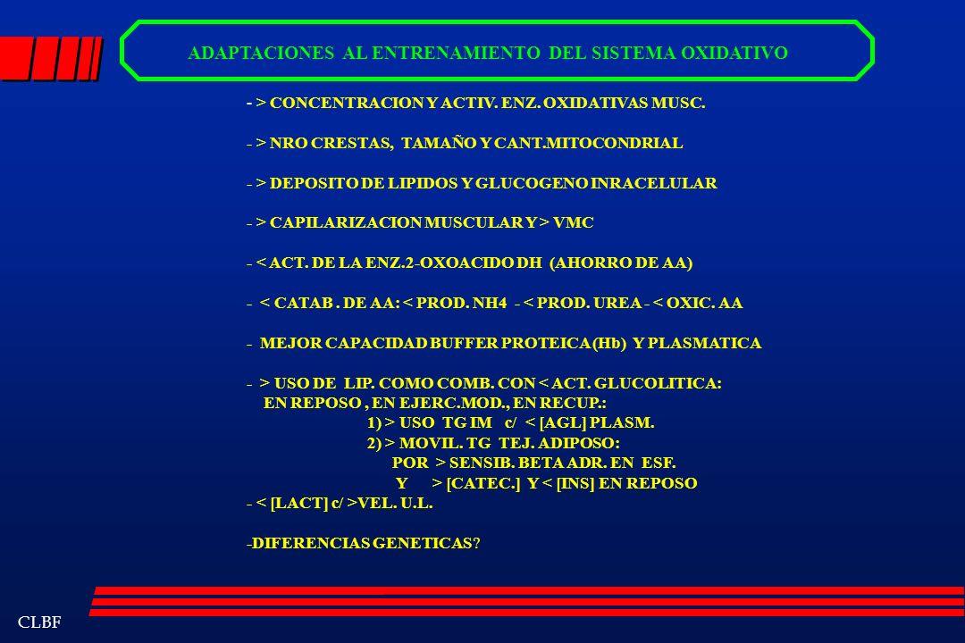 CLBF ADAPTACIONES AL ENTRENAMIENTO DEL SISTEMA OXIDATIVO - > CONCENTRACION Y ACTIV. ENZ. OXIDATIVAS MUSC. - > NRO CRESTAS, TAMAÑO Y CANT.MITOCONDRIAL