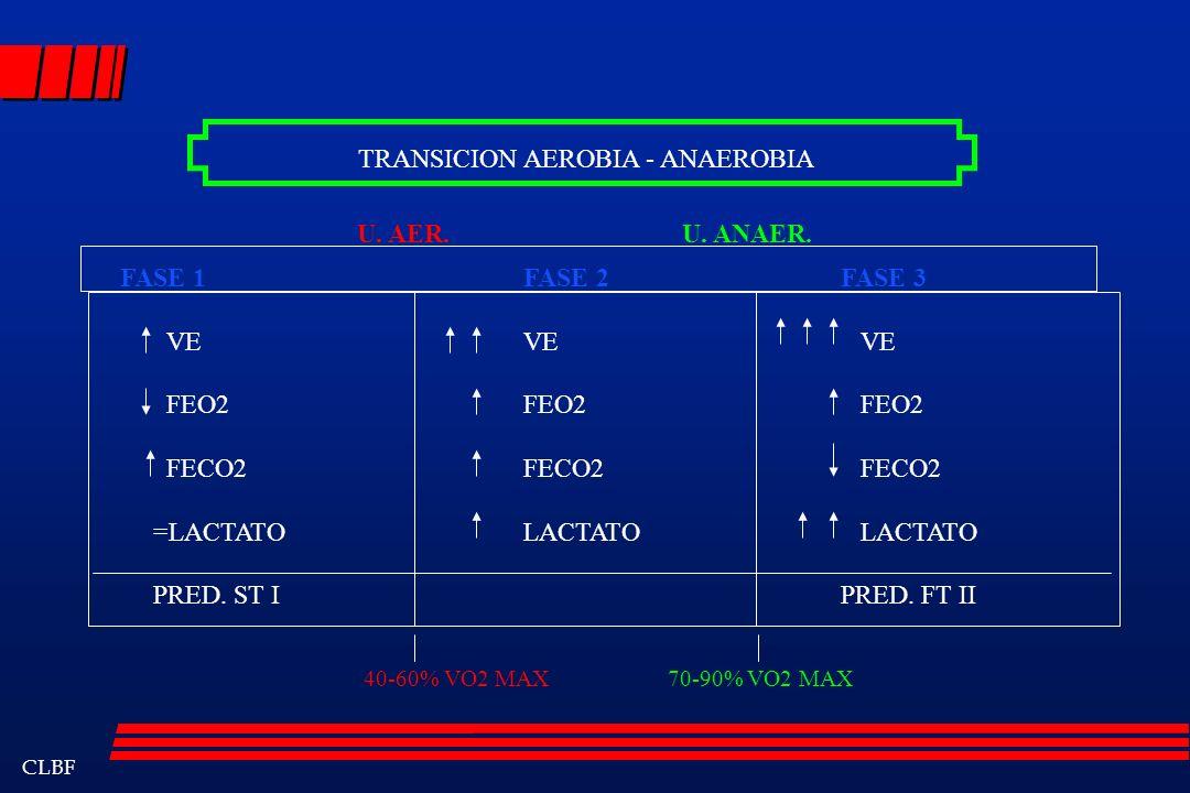 CLBF TRANSICION AEROBIA - ANAEROBIA FASE 1 VE FEO2 FECO2 =LACTATO PRED. ST I FASE 2 VE FEO2 FECO2 LACTATO FASE 3 VE FEO2 FECO2 LACTATO PRED. FT II U.