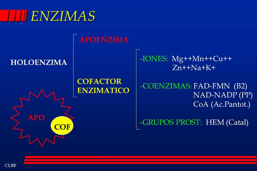 CLBF ENZIMAS HOLOENZIMA COFACTOR ENZIMATICO -IONES: Mg++Mn++Cu++ Zn++Na+K+ -COENZIMAS: FAD-FMN (B2) NAD-NADP (PP) CoA (Ac.Pantot.) -GRUPOS PROST: HEM