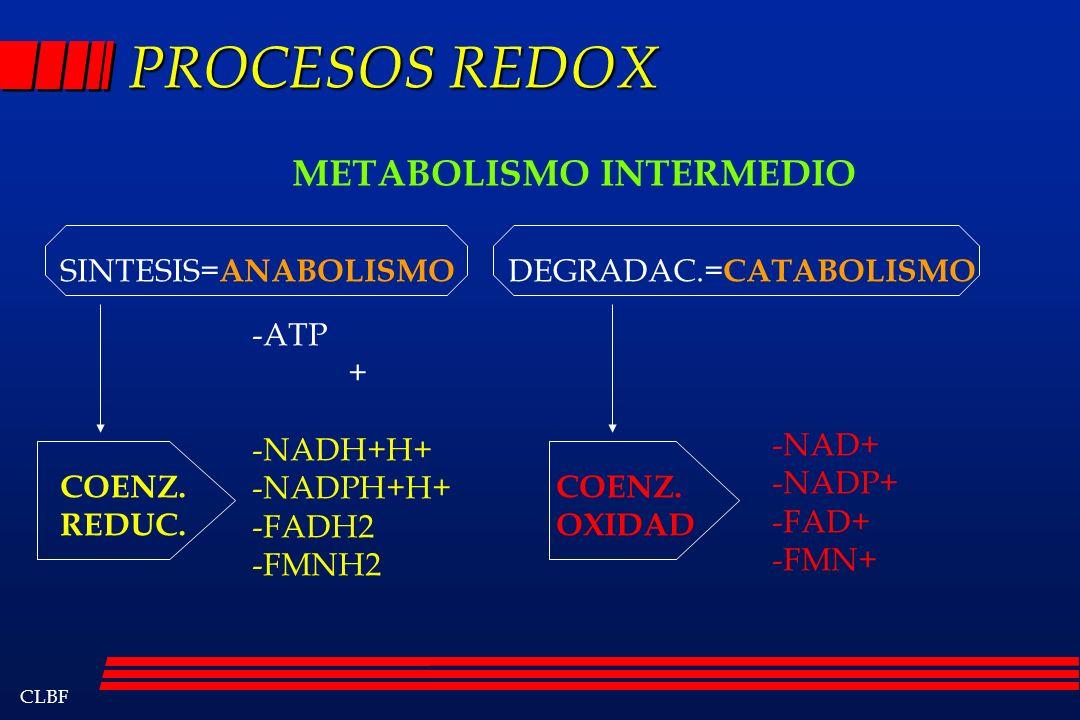 CLBF PROCESOS REDOX METABOLISMO INTERMEDIO SINTESIS= ANABOLISMO DEGRADAC.= CATABOLISMO -ATP + -NADH+H+ -NADPH+H+ -FADH2 -FMNH2 -NAD+ -NADP+ -FAD+ -FMN