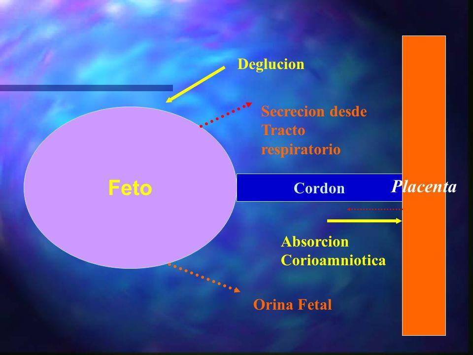 Feto Cordon Placenta Deglucion Orina Fetal Secrecion desde Tracto respiratorio Absorcion Corioamniotica