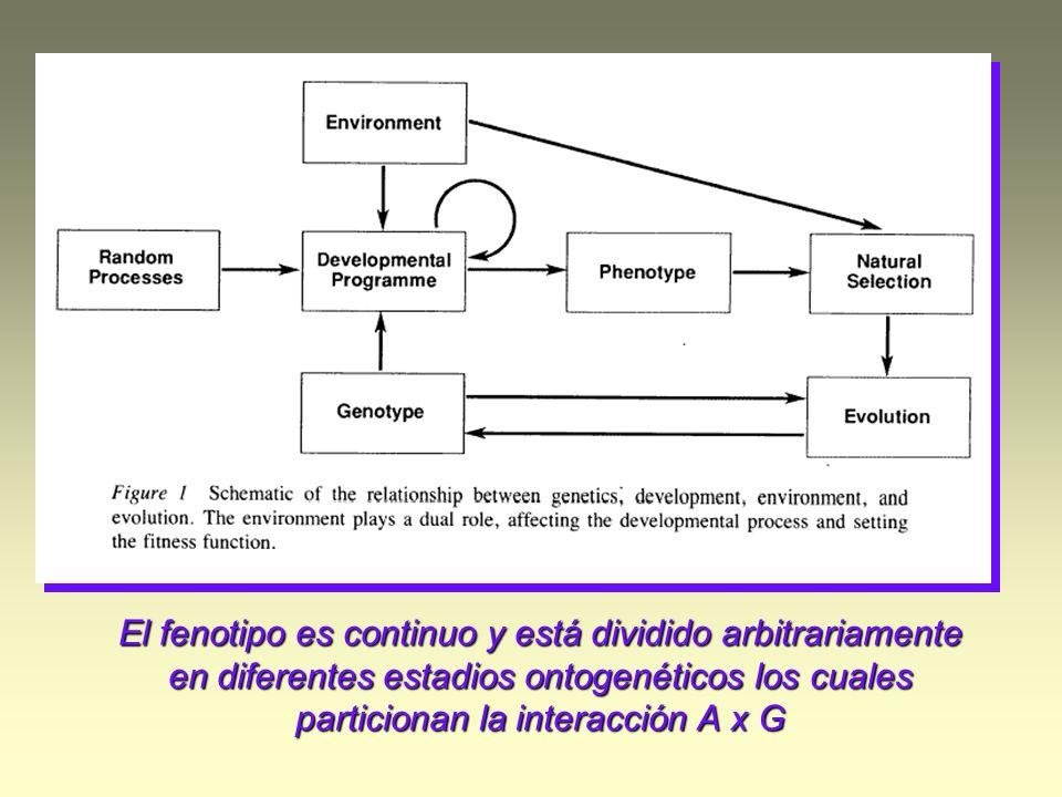 El fenotipo es continuo y está dividido arbitrariamente en diferentes estadios ontogenéticos los cuales particionan la interacción A x G
