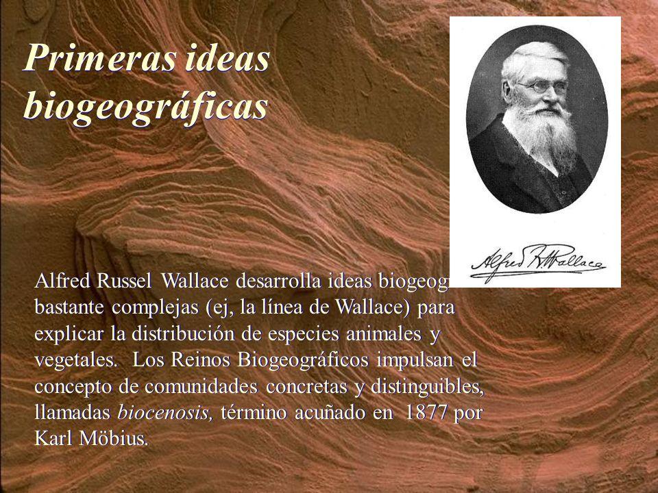 Alfred Russel Wallace desarrolla ideas biogeográficas bastante complejas (ej, la línea de Wallace) para explicar la distribución de especies animales