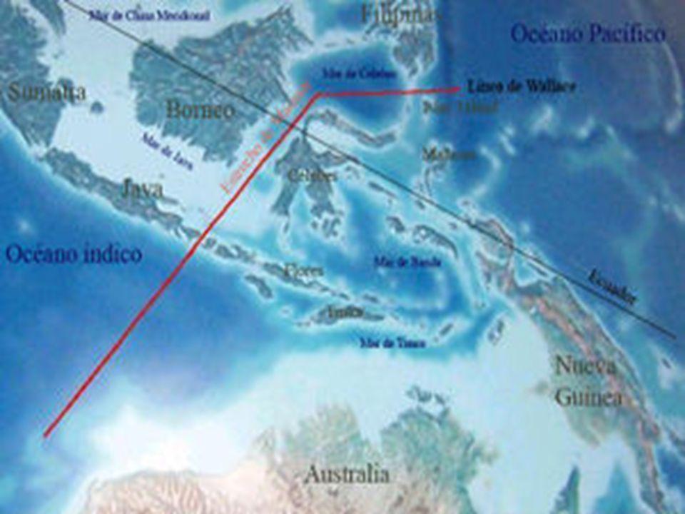 Separa las regiones biogeográficas de Asia y Australasia. Al Oeste de la línea tenemos especies de origen asiático, al Este especies de origen austral