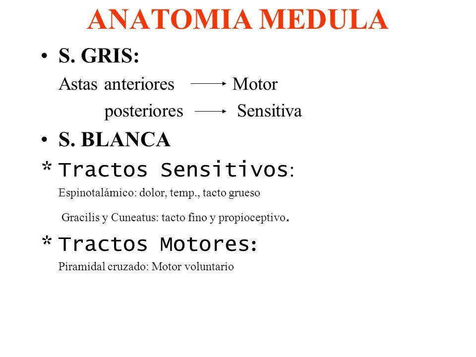 ANATOMIA MEDULA S. GRIS: Astas anteriores Motor posteriores Sensitiva S. BLANCA *Tractos Sensitivos : Espinotalámico: dolor, temp., tacto grueso Graci