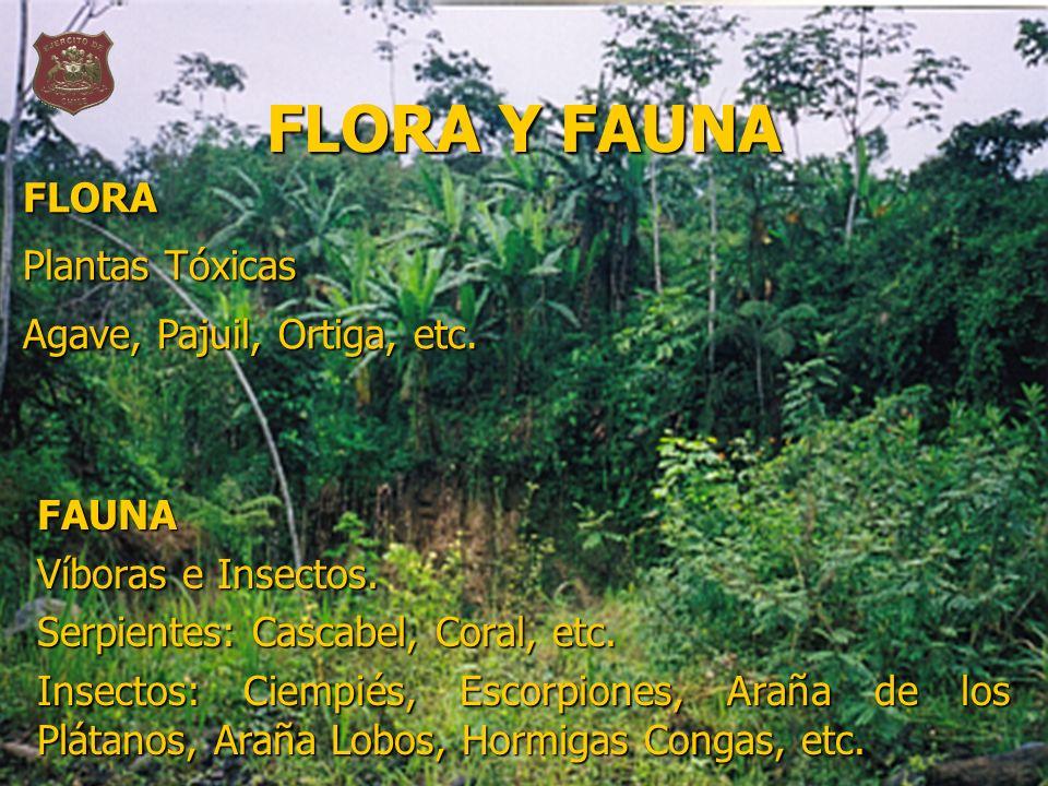 FLORA Y FAUNA FAUNA Víboras e Insectos. Serpientes: Cascabel, Coral, etc. Insectos: Ciempiés, Escorpiones, Araña de los Plátanos, Araña Lobos, Hormiga