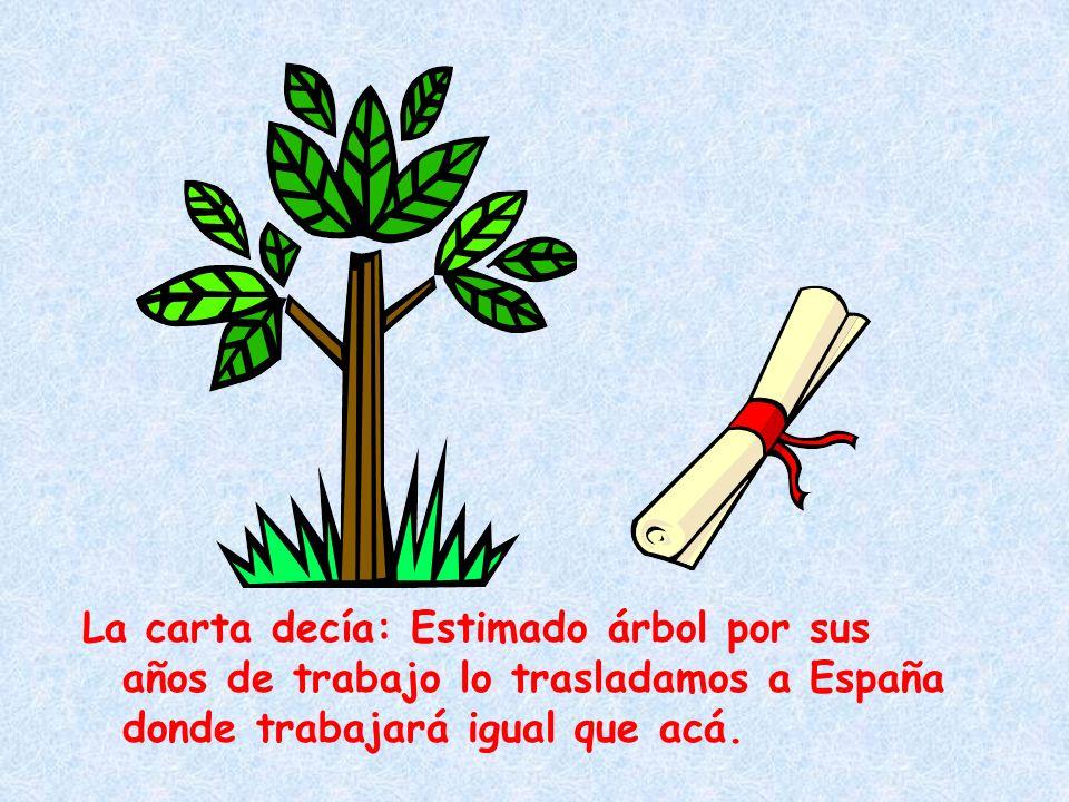 La carta decía: Estimado árbol por sus años de trabajo lo trasladamos a España donde trabajará igual que acá.