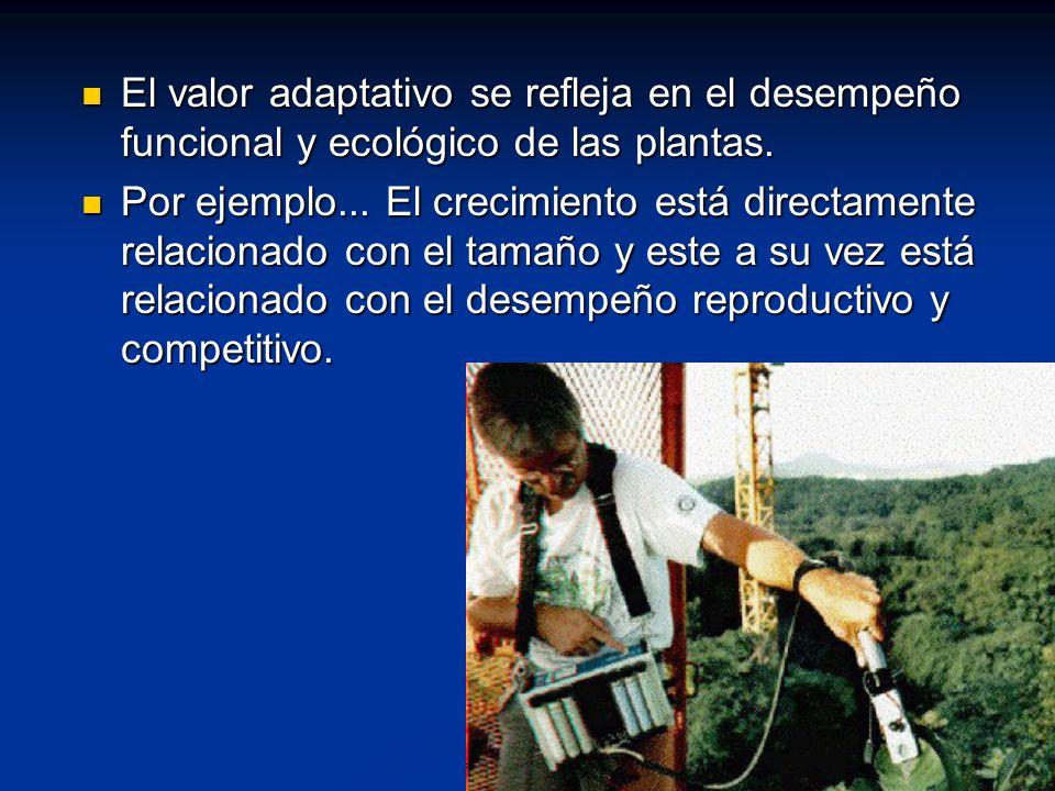 El valor adaptativo se refleja en el desempeño funcional y ecológico de las plantas. El valor adaptativo se refleja en el desempeño funcional y ecológ