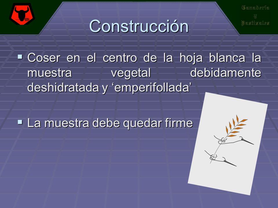 Construcción Coser en el centro de la hoja blanca la muestra vegetal debidamente deshidratada y emperifollada Coser en el centro de la hoja blanca la