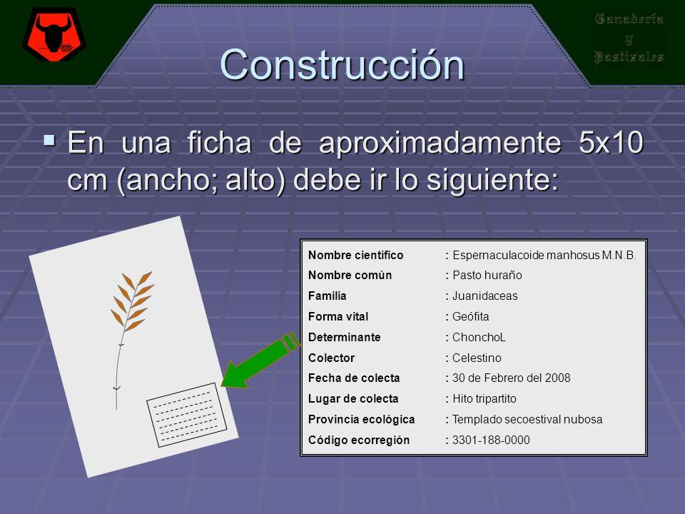 Construcción En una ficha de aproximadamente 5x10 cm (ancho; alto) debe ir lo siguiente: En una ficha de aproximadamente 5x10 cm (ancho; alto) debe ir