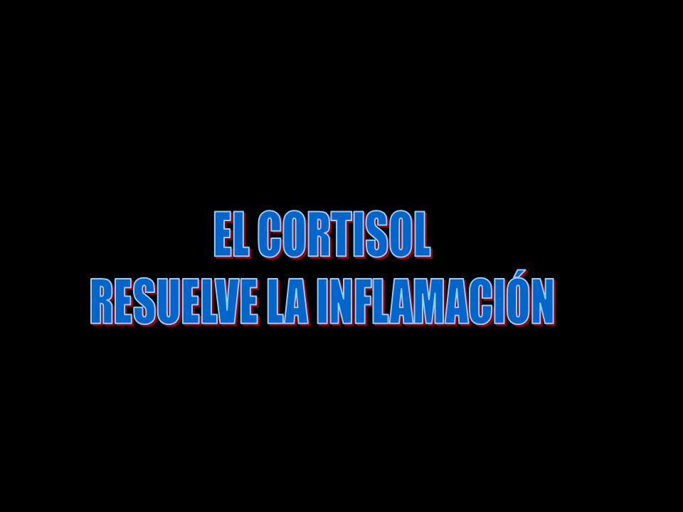 5. El cortisol disminuye la fiebre, sobre todo porque reduce la liberación de ínter leucina 1 de los leucocitos, 5. El cortisol disminuye la fiebre, s