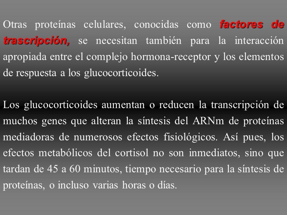 elementos de respuesta a los glucocorticoides, El cortisol, como otras hormonas esteroideas, ejerce sus efectos mediante interacción inicial con los r