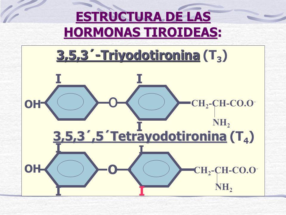 ESTRUCTURA DE LAS HORMONAS TIROIDEAS: 3,5,3´-Triyodotironina 3,5,3´-Triyodotironina (T 3 ) CH 2 -CH-CO.O - o II I NH 2 OH 3,5,3´,5´Tetrayodotironina 3